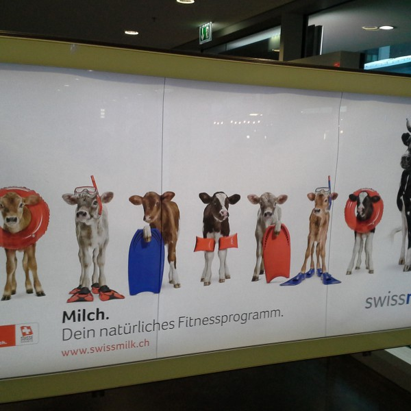 Swiss cow propaganda!