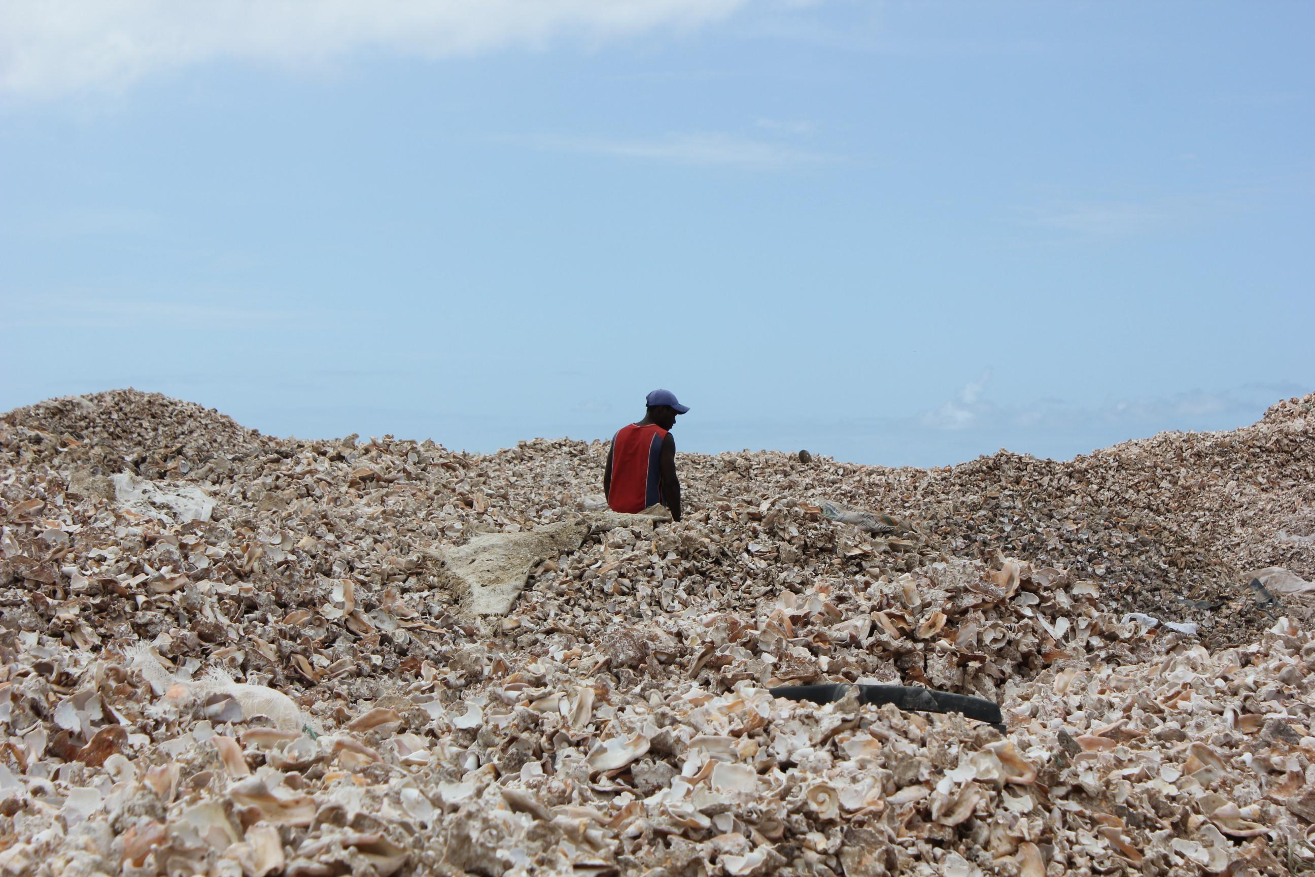 seashell dump